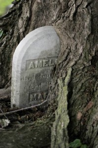 Overgrown tombstone (photo from phase.com)